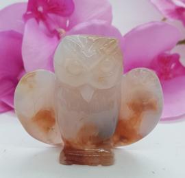 Flower agaat  uil