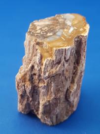 Versteend hout stam