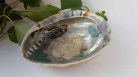Abalone schelp XXL