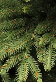 <<<14-03-2019>>> Milieuvriendelijker:  echte of kunstboom?