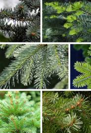 <<<28-05-2020>>> Welke kerstboom is voor mij de juiste?