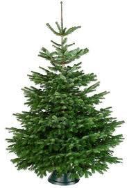 <<<13-02-2019>>> Waarom zetten wij een Kerstboom?