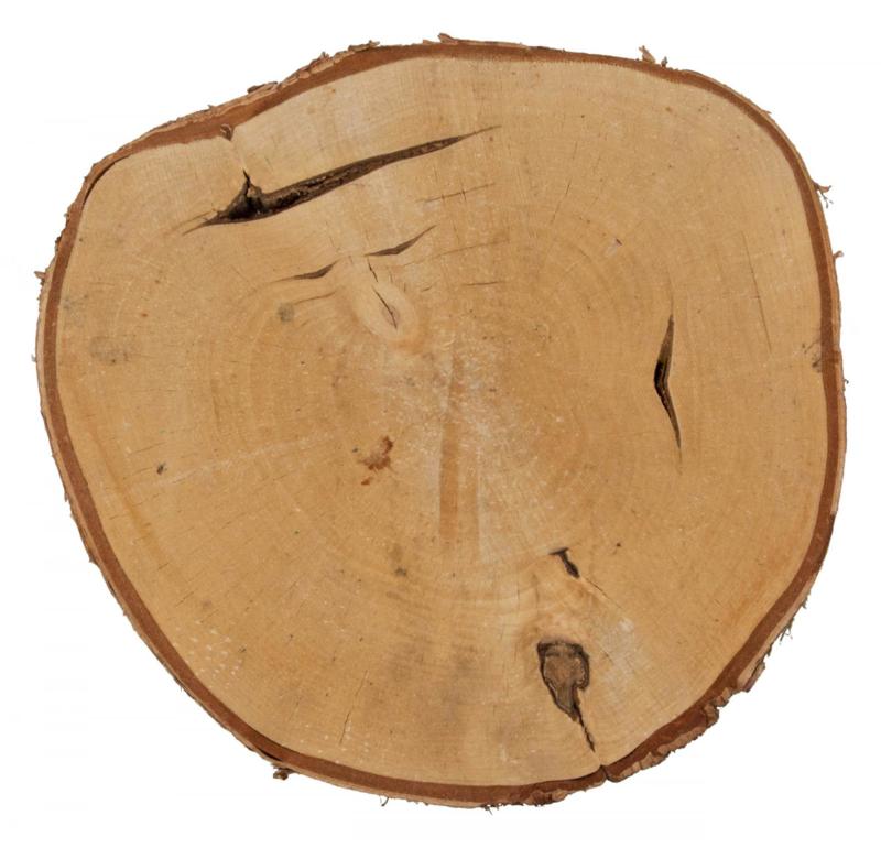Berkenschijf 29-32cm
