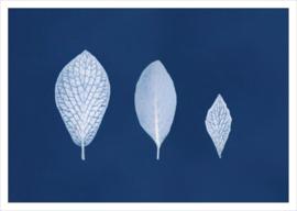 """Kaart """"3 leaves"""""""