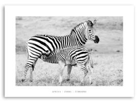 "Canvas print ""Zebra"""