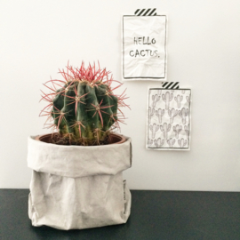 "Canvas print ""Hello cactus"""