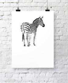 "Poster ""Zebra"""