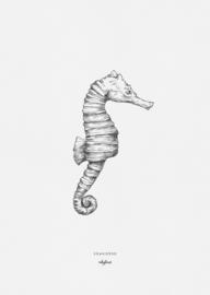 """A4 Poster """"Zeepaardje"""""""