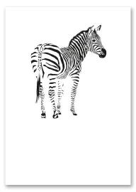 "Postcard ""Zebra"""