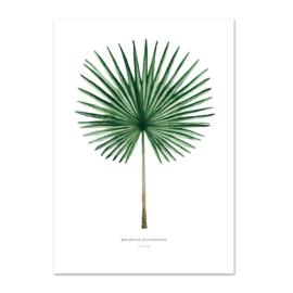 """Kaart """"Palm"""""""