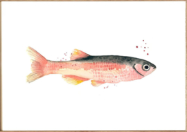 "Kaart ""Rose fish"""