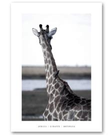 """A5 Canvas print """"Giraffe"""""""