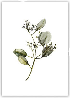 "Kaart ""Eucalyptus blossom"""