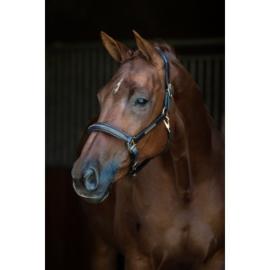 lederen halster Horse name