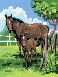Royal & Langnickel painting by numbers mare & foal PJS21-3T