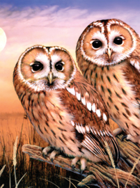 Royal & Langnickel painting by numbers tawny owls PJS87-3T