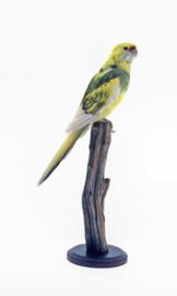 Geelbuikrosella ( Platycercus caledonicus )