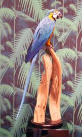 Blauwgele Ara (Ara arauna)
