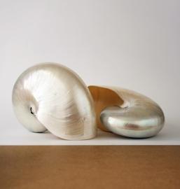 Nautilus gepolijst