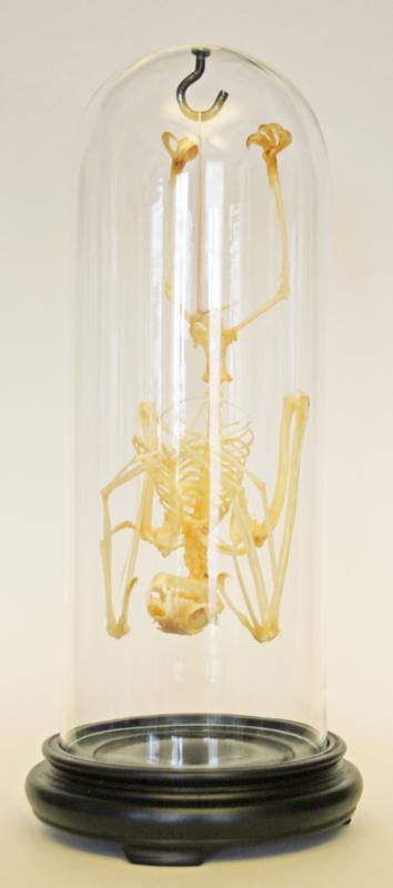 Vleermuis skelet in stolp