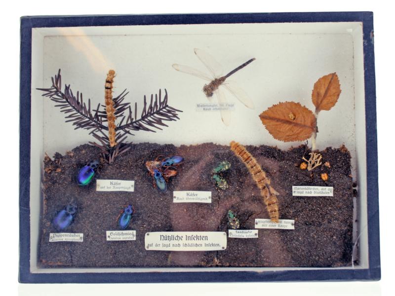 Nubliche insekten antiek schooldoos uit duitsland