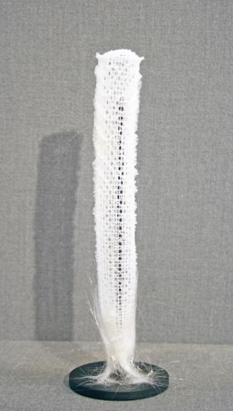 Venusmandje (Euplectella aspergillum)