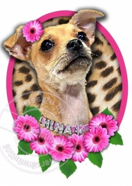 Strijkapplicatie Chihuahua Pink Panter