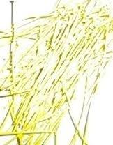 100 stuks electroplated nietstiften 50 x 0,7mm,  geel lees omschrijving