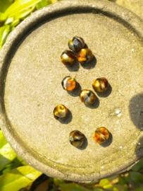 10 x Mooie facet kristalkralen beige met bruin 8 mm