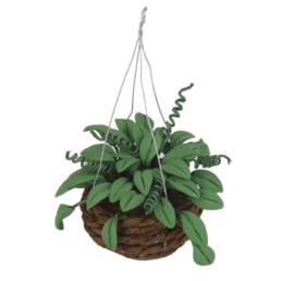 poppenhuis hangplant hanging basket