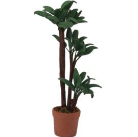 poppenhuis plant yucca in pot