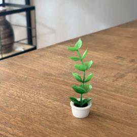 poppenhuis plant in pot 6 cm