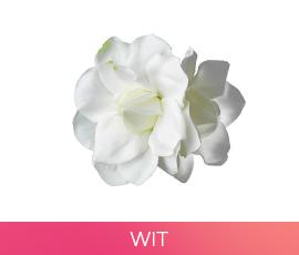 bloemen_01_wit.jpg