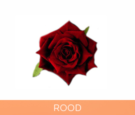 bloemen_04_rood.jpg