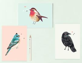 Vogel Illustratie BIRDIES postkaarten - set van 3