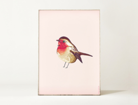 Roodborstje Vogel Illustratie BIRDIE ROBIN kunst poster - A4 formaat
