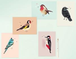 Vogel Illustratie BIRDIES postkaarten - set van 5