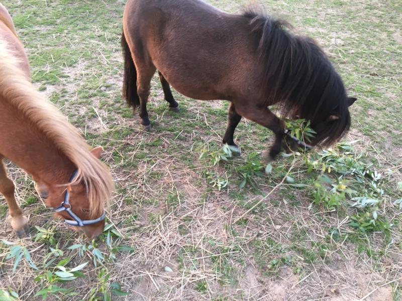Wilgentakken & Paarden. Het hoe, wat, waar en waarom..