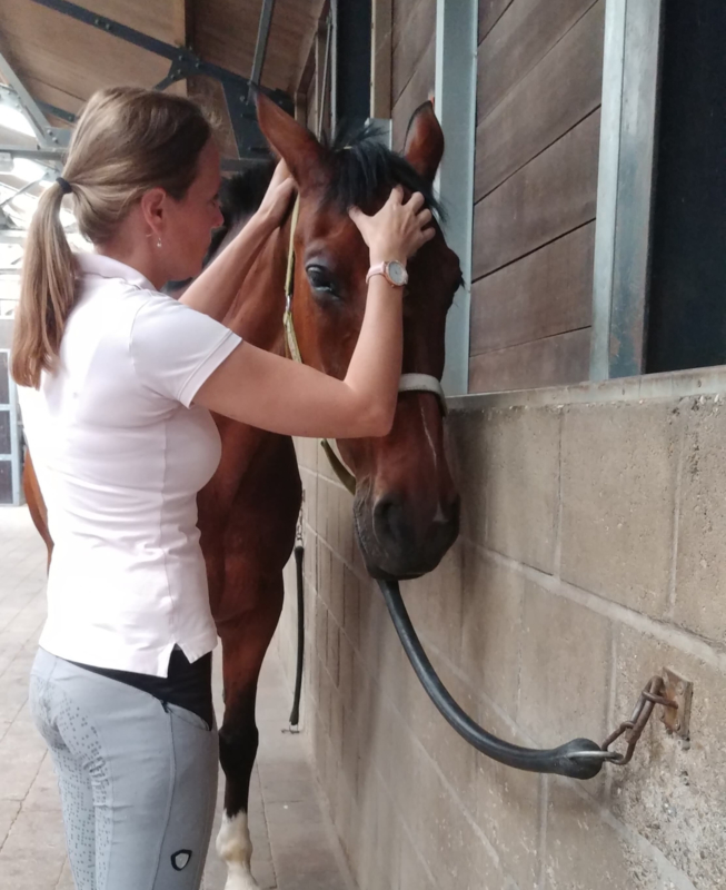 PAARDENZORG TRAUMA BEHANDELING & EQUISSAGE