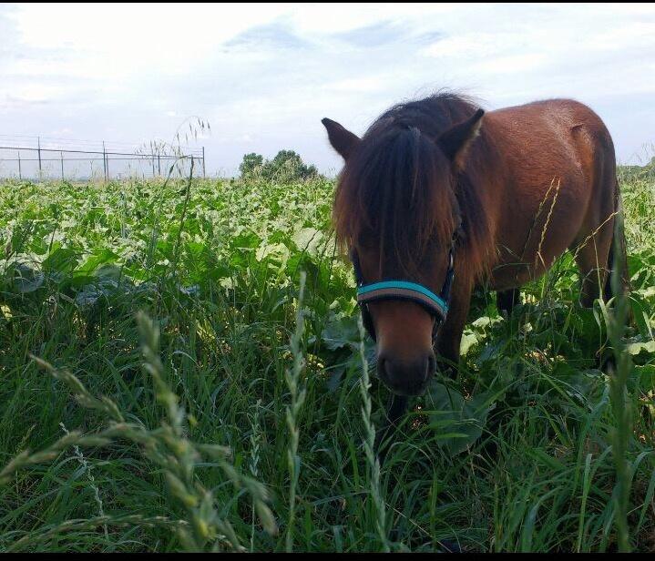 Waarom is het goed om je paard te ontgiften (d-toxen)?