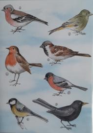 Wenskaarten 5 stuks 7 vogels met bedrukte enveloppen