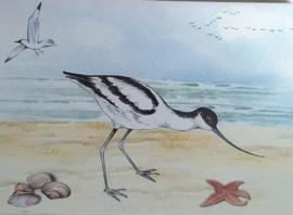 Wenskaarten kluut op strand met schelpen en bedrukte enveloppen.