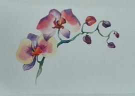 Wenskaarten orchidee roze in cadeaudoosje 5 stuks