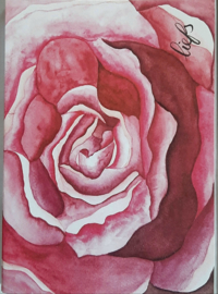Wenskaarten in cadeau doos roze roos met liefs