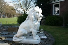 Twee leeuwen set xxl