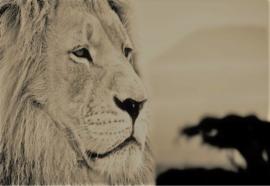 De Leeuw Safari 2 - Glas Art