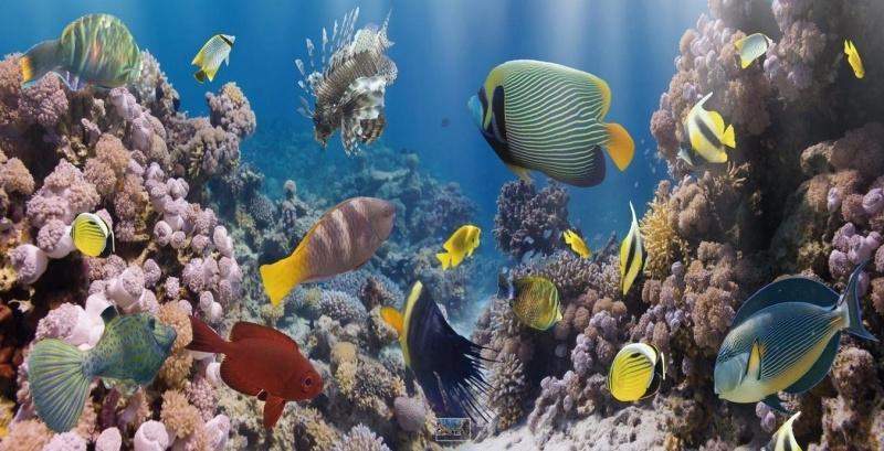 Tropisch Aquarium - Glas Art