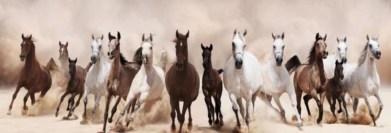 Wild Horses - Glas Art
