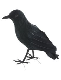 Kraai zwart