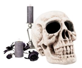 Skelet hoofd Masterbrain